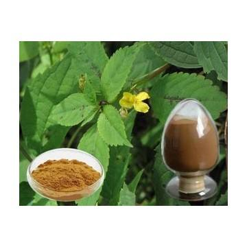 Nettle Extracts Powder